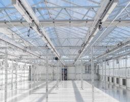 Cannasouth CEA greenhouse interior